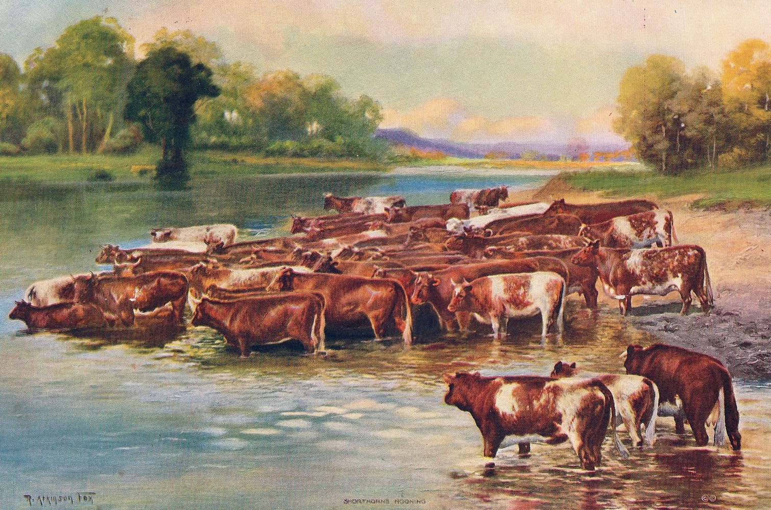 Cows/Cattle