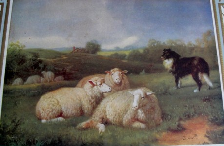Carr - Sheep and Collie
